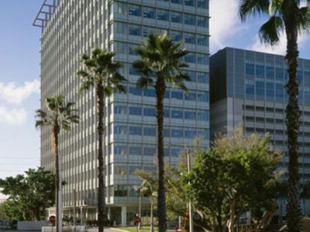 tall office building with palm trees in front